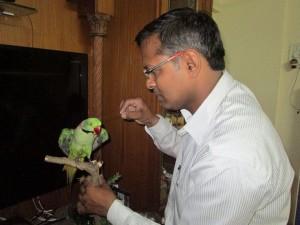 India's_only_Wild-life_Taxidermist_Veterinarian_Dr_Santosh.Gaikwad_at_work_on_a_pet_Alexandrine_parakeet