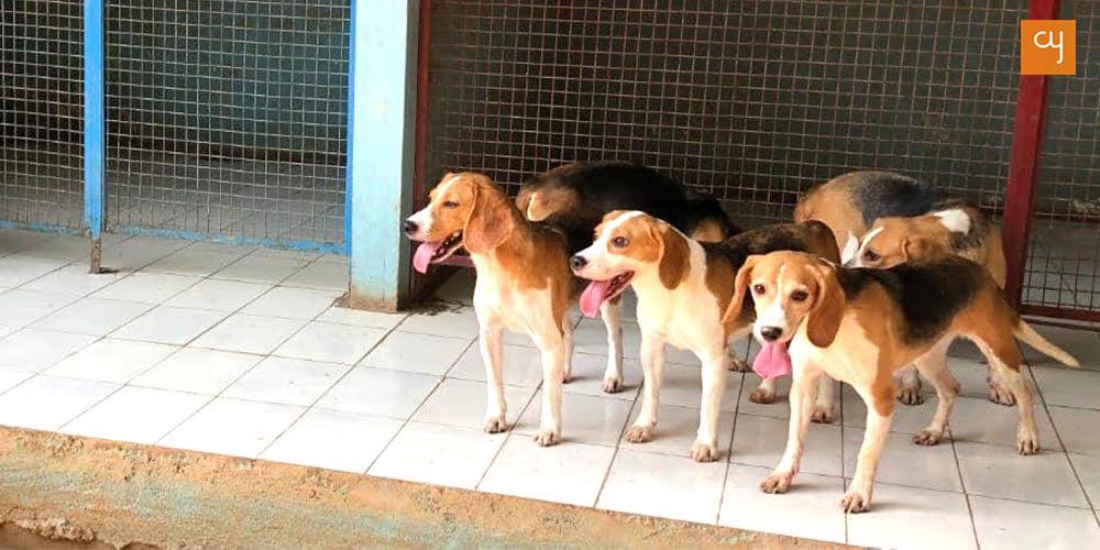 Freagles aka freed beagles