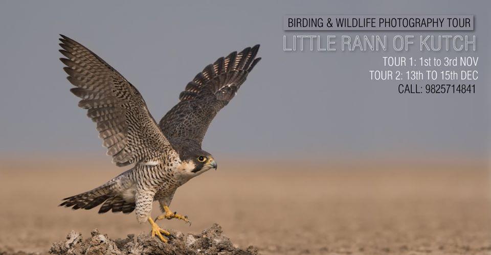 https://creativeyatra.com/wp-content/uploads/2019/11/Birding-Wildlife-Photography-Tour-LRK-Budget.jpg